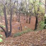 Harlton woods