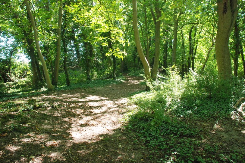 Harlton Clunch Pit